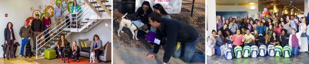 Charity team building with animals- Pet Rescue with Atlanta Challenge