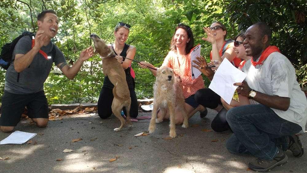 Pet Rescue team building with animals